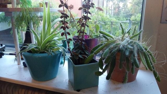 plantjes vertellen